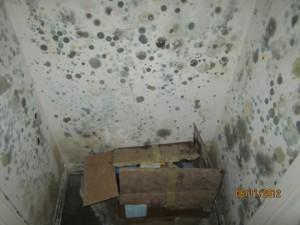 Удаление плесени со стен